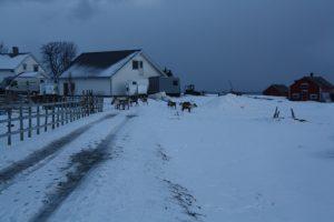 Nordlicht Tour Tromsø - Scan Adventure