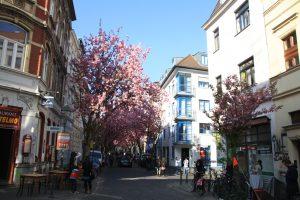 Die Kirschblüte in der Altstadt von Bonn