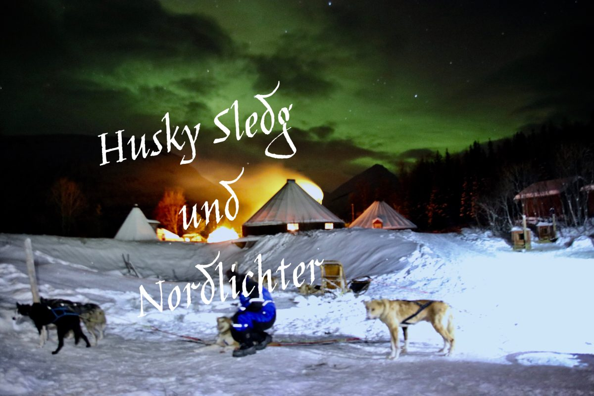 Husky Hundeschlittenfahrt unter Nordlichtern – Tromsø