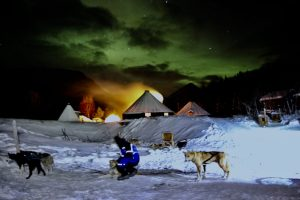 Husky Hundeschlittenfahrt unter Nordlichtern - Tromsø