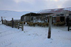 Sheep & Horse Farm Kopareykir - Der alte Schafstall