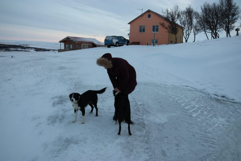 Sheep & Horse Farm Kopareykir - Holiday Homes