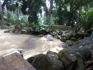 Botanischer Garten in Victoria, Mahé - Seychellen