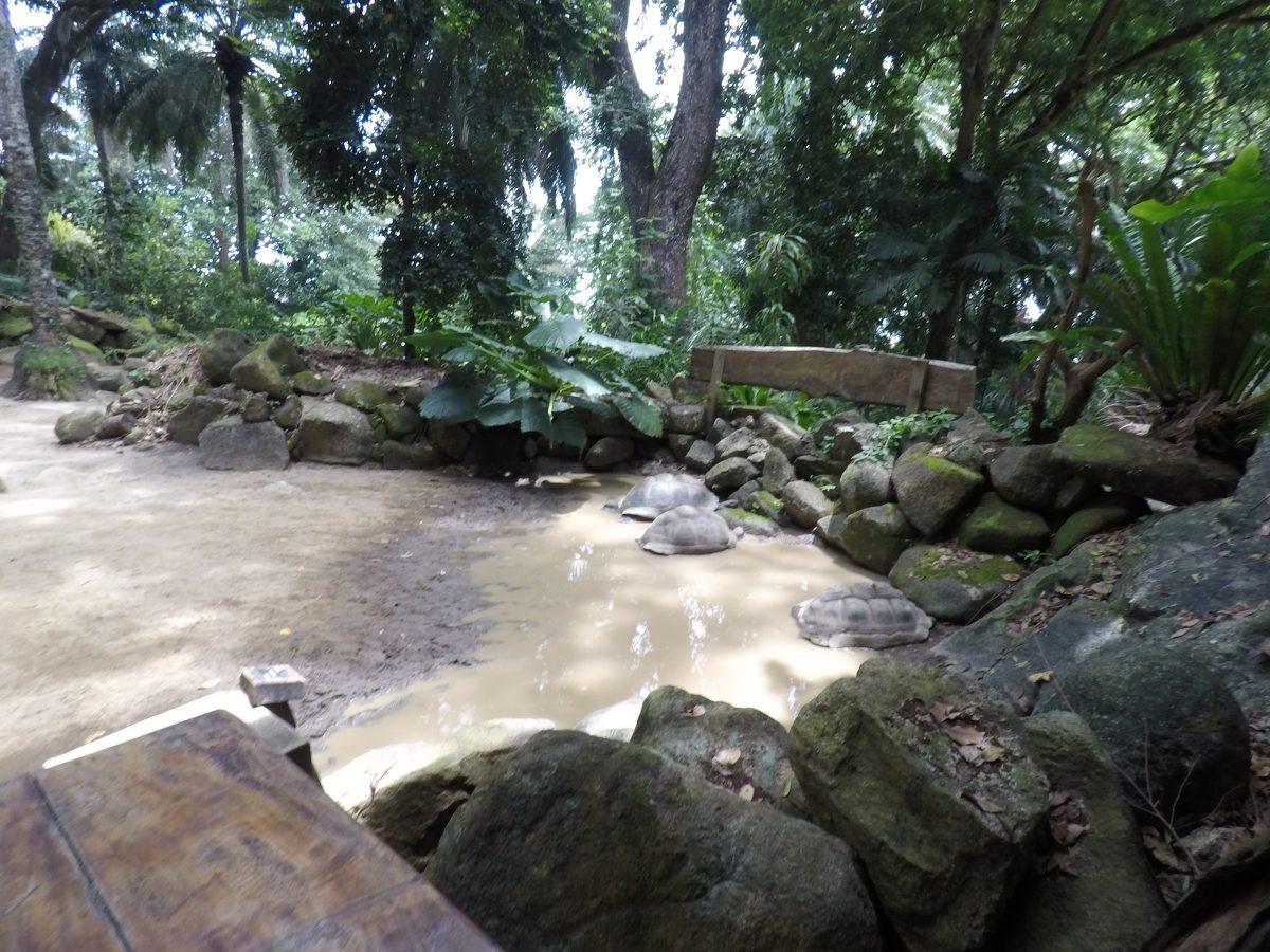 Botanischer Garten in Victoria, Mahé – Seychellen