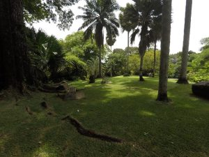 Botanischer Garten in Victoria