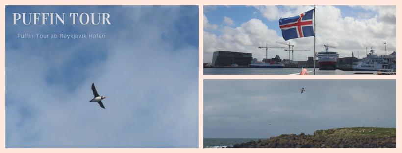Puffin Beobachtungstour in Reykjavik - Papageientaucher in Ìsland